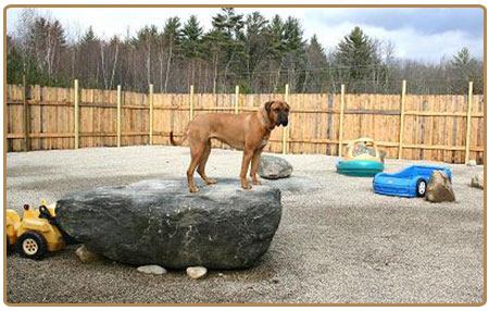 A precious pet resort pet boarding henniker